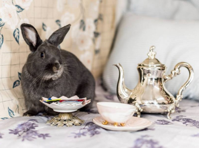 Have Afternoon Tea With Rabbits!