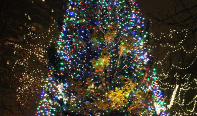 Julian Kicks Off The Holiday Season With The Annual Lighting Of The Town's Huge Living Christmas Tree