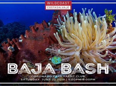 You Are Invited To The 7th Annual Baja Bash from Wildcoast