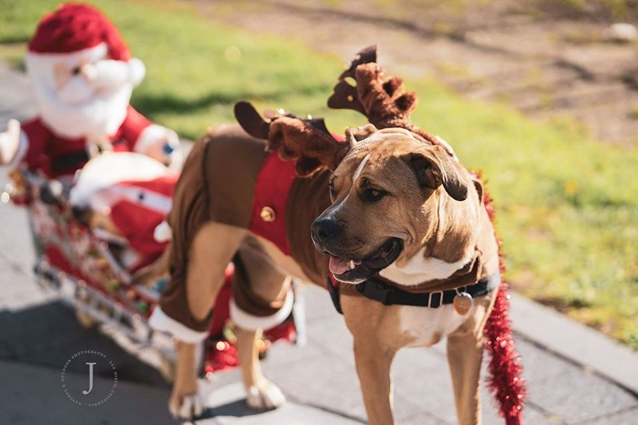 12th Annual Just Food For Dogs Gaslamp Holiday Pet Parade